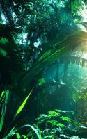 Jungle Live Wallpaper for PC